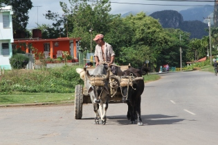Environmental friendly mean of transportation - horses, cows and donkeys are still very common for transportation