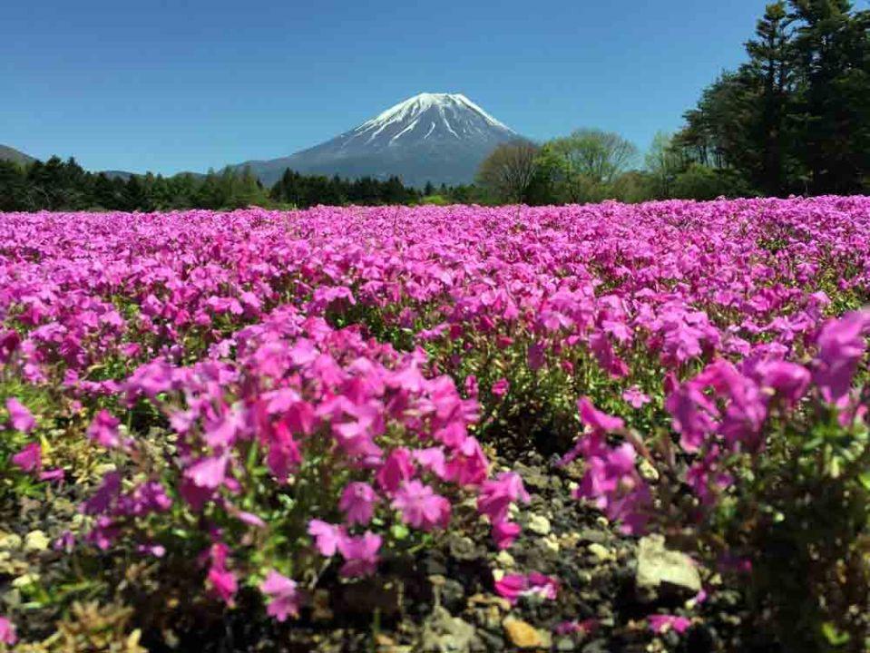 160405_Japan_Iphone_3749